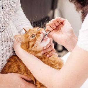 Як вибрати і правильно застосовувати заспокійливе для кішок