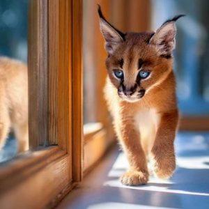 Характер і правила утримання кішок породи каракал