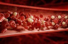 Загальний білок крові – норма