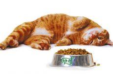 Огляд кормів для кішок або як вибрати якісне харчування