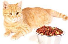 Опис сухих і вологих кормів для стерилізованих кішок