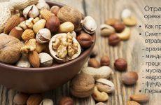 Отруєння горіхами: мигдалем, арахісом, волоськими, кедровими горіхами