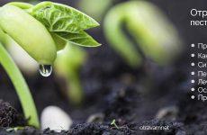 Отруєння пестицидами та отрутохімікатами