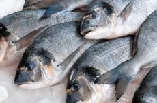 Отруєння рибою: симптоми і лікування в домашніх умовах