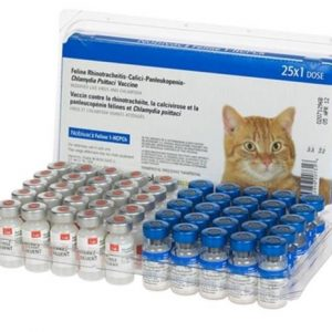 Правила застосування і типи вакцини «Нобівак» для кішок