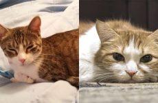 Блювота у кішки, кошенят білою піною: причини, діагностика, лікування