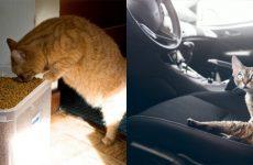 Блювота у кота: причини, види, лікування, рекомендації та профілактика