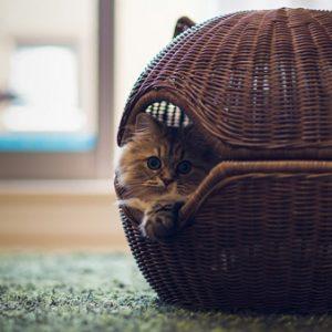 Умови для утримання та правила догляду за кішками