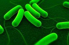 Бактеріальний менінгіт у дітей: симптоми, наслідки, лікування