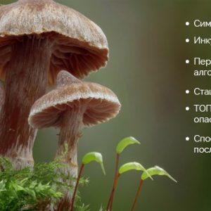 Отруєння грибами: симптоми, ознаки, через скільки проявляється, допомога