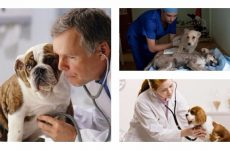 Чим небезпечний ентерит у собак і методи його лікування, що потрібно знати