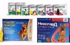 Ефективні таблетки від кліщів для собак і можливі інші варіанти.