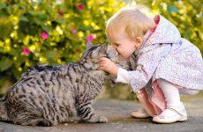 Як проявляється алергія на кішок у дітей