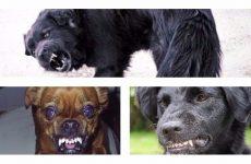 Як проявляються симптоми сказу у собак і їх форми