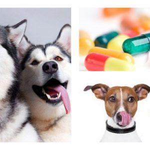 Які вітаміни потрібні для собак і в чому їх особливості.