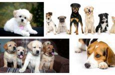 Якими бувають породи собак: найдивовижніші види