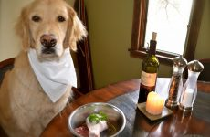 Натуральне харчування для собаки – особливості, плюси і мінуси.