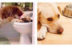 Чому виникає блювота у собаки: основні причини і всі можливі