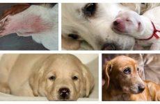 Різні хвороби собак і перші симптоми захворювань.