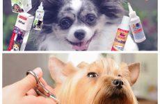 Догляд за собакою – невід'ємна частина життя як власника, так і вихованця