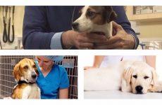 В яких випадках повинна проводитися стерилізація собак