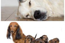 Пологи у собак – все, що необхідно знати власнику.