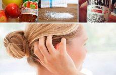 Народні засоби від вошей і гнид: перевірені рецепти