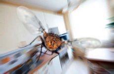 Народні засоби від мух в будинку: пастки, рослини, методи боротьби