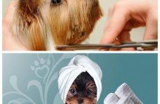 Стрижка собак – основні моменти, рекомендації для власників.