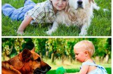 Породи собак для дітей – найбільш і найменш придатні, правила вибору.