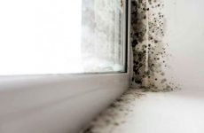 Цвіль на пластикових вікнах: як позбутися, чим відмити