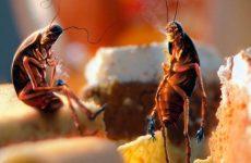 Чого бояться таргани в квартирі: ТОП 10 ефективних засобів