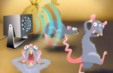Ультразвуковий відлякувач щурів і мишей: огляд кращих, відгуки