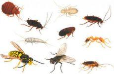 Види комах в квартирі з фото і назвами, як позбутися
