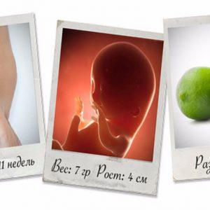 Що відбувається з матір'ю і дитиною на 11 тижні вагітності