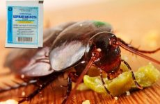 Борна кислота від тарганів: перевірені рецепти з яйцем, цукром і солодким сиропом