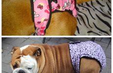 Труси для собаки під час тічки – особливості вибору та шкарпетки