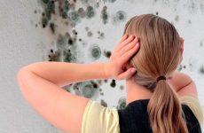 Цвіль в квартирі: як позбутися, засоби боротьби з цвіллю