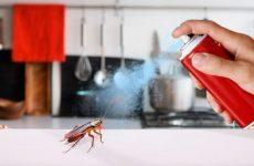 Чим ефективно труїти тарганів у квартирі самостійно: препарати та народні засоби