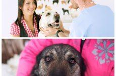 Епілепсія у собак – що потрібно знати власнику