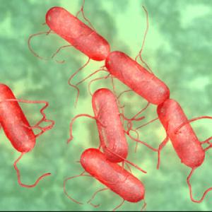 Інкубаційний період сальмонельозу у людини: симптоми