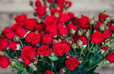 Мірабель троянда — опис, правила догляду, підготовка до зими