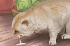 Отруєння кішки щурячою отрутою: симптоми і лікування, наслідки