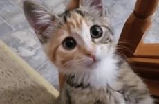 Отруєння кошеня: що робити, симптоми і лікування, профілактика