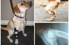 Рахіт у собак – що робити при постановці діагнозу, методи лікування