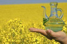 Ріпакова олія для дітей – всі «за» і «проти», результати досліджень