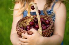 Вишня в дитячому меню – користь і шкоду + 4 найкращі рецепти