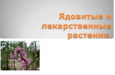 Отруйні сильнодіючі лікарські рослини: ягід список