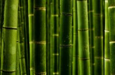 5 способів застосування бамбука для прикраси квартири