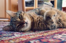 """Котячі """"мітки"""" – як позбавитися від запаху і запобігти їх появі"""